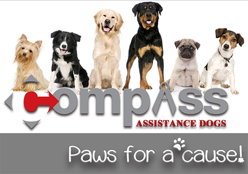 Six Assistance Dogs in a row